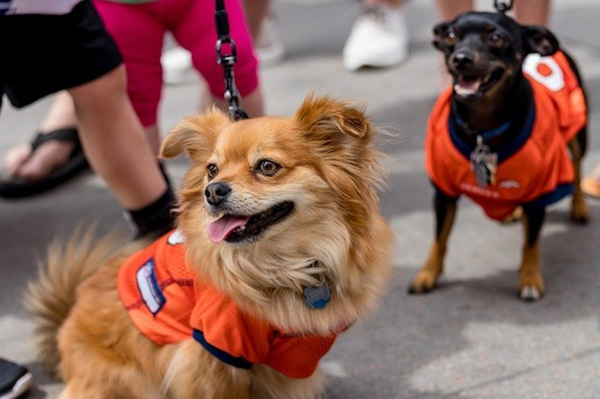 Organizing outings with other pups or adult dogs can teach excitable puppies to focus on other stimuli on walks.