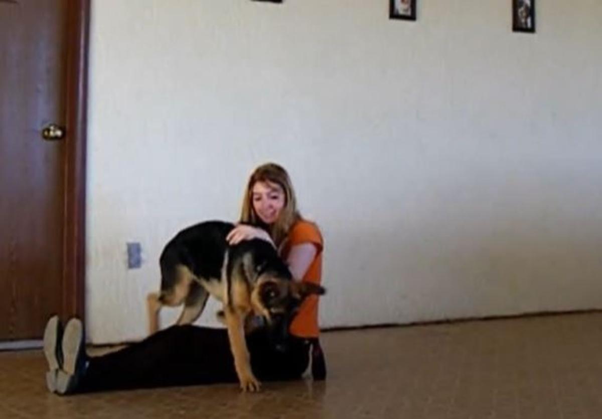 Getting a German Shepherd puppy used to handling