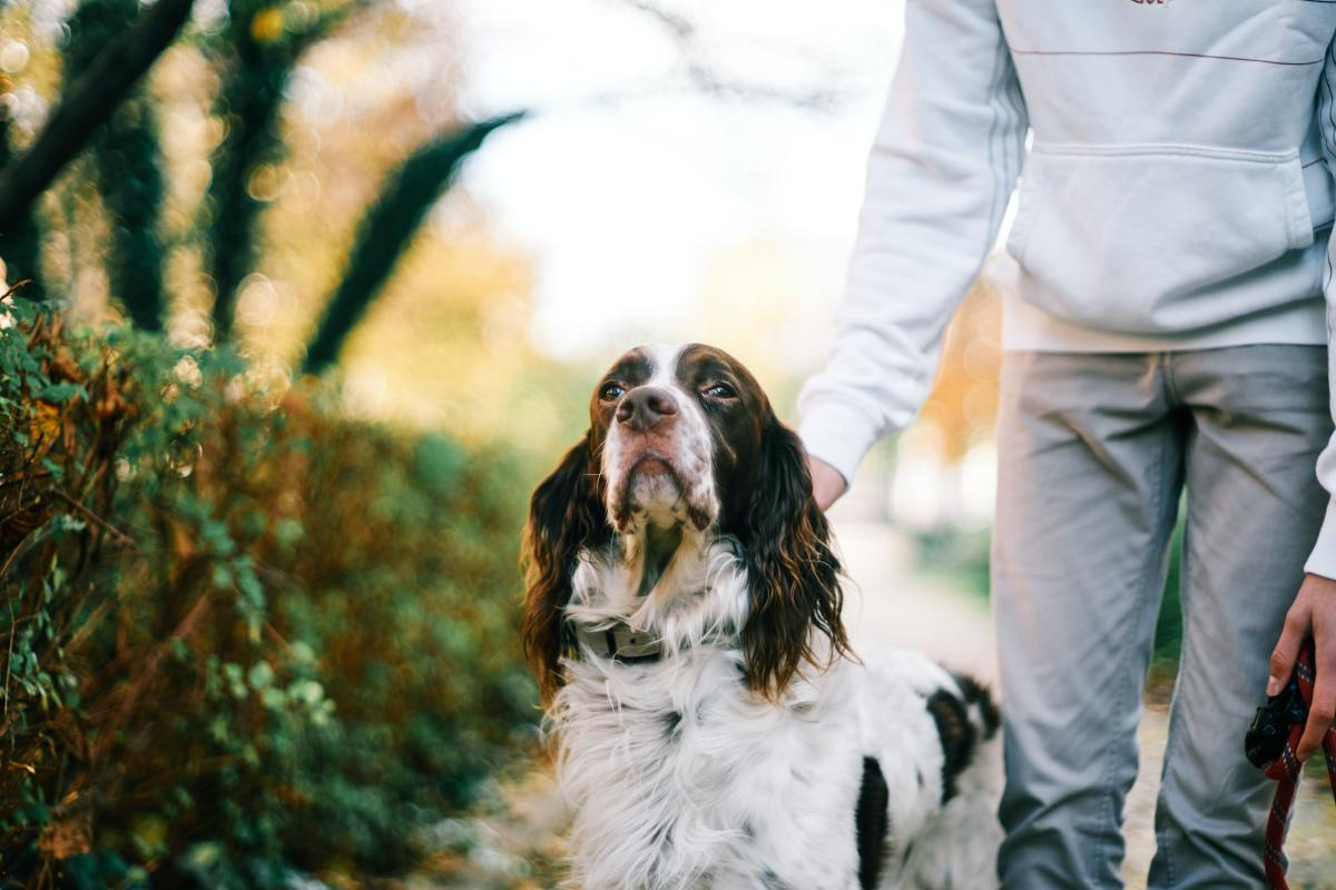 Training a dog can help resolve some of the behavioral issues.