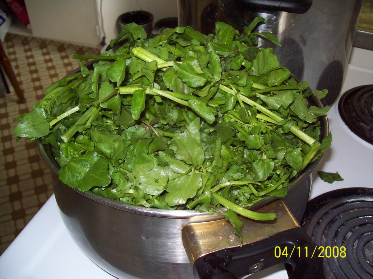 Watercress fresh just added to pot