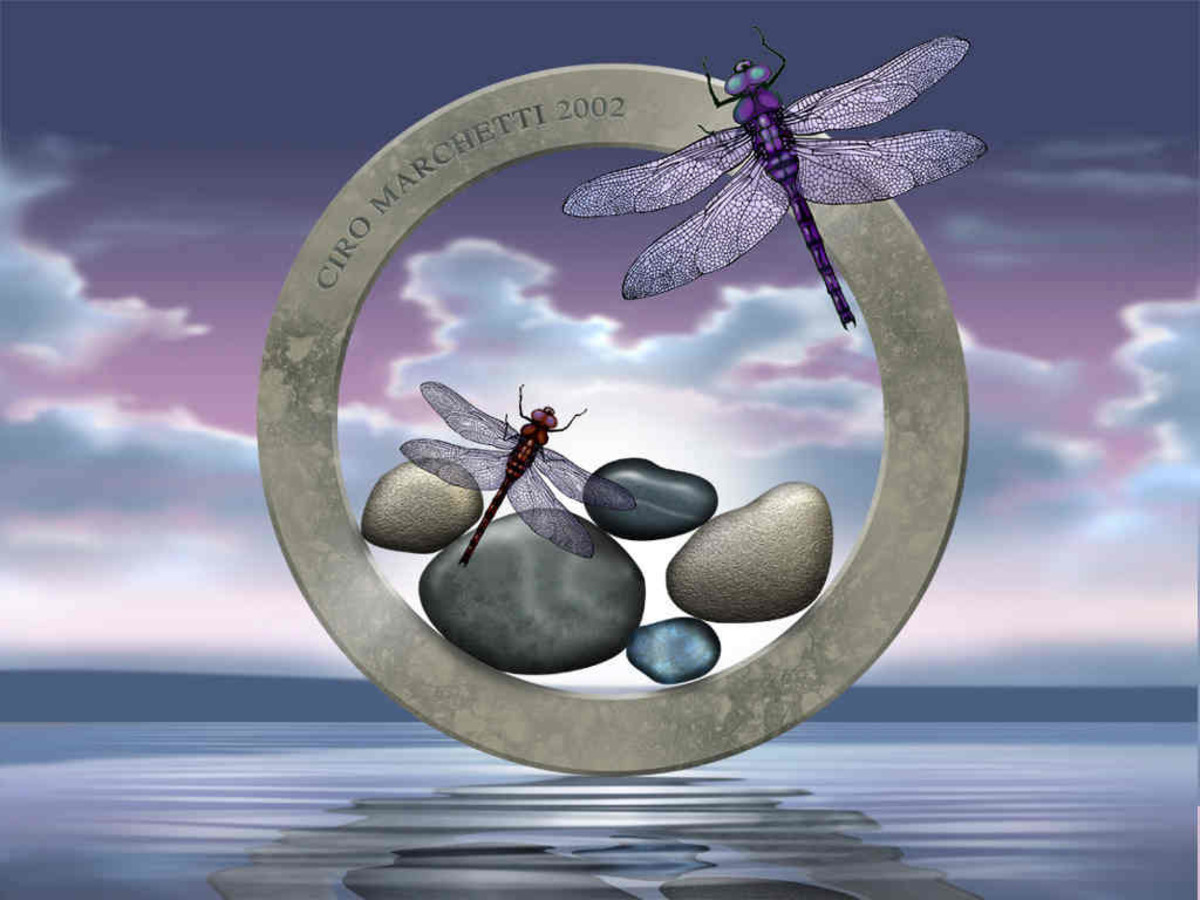 Dragonflies and Stones