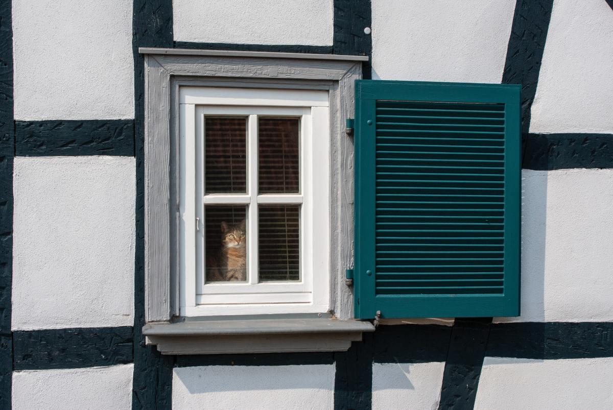 A cat watching a bird from a window.