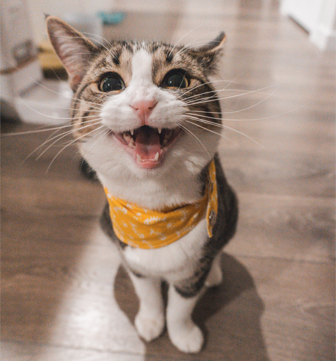 Why Do Cats Meow so Much?