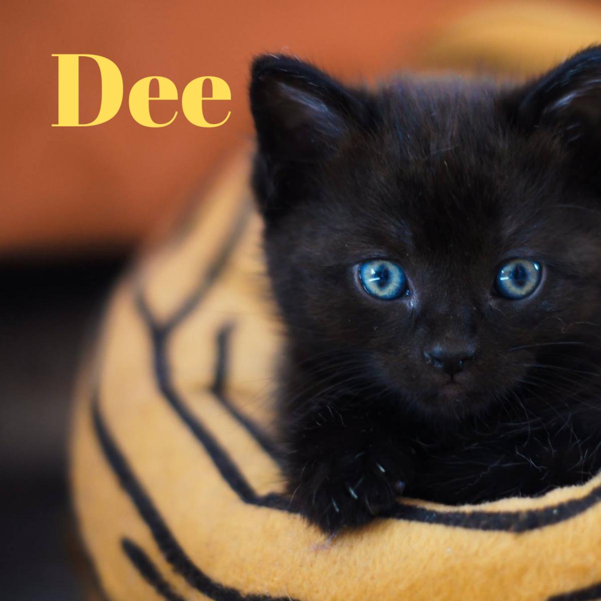 A kitten named Dee