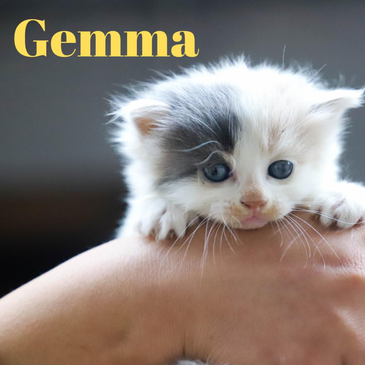 A kitten named Gemma
