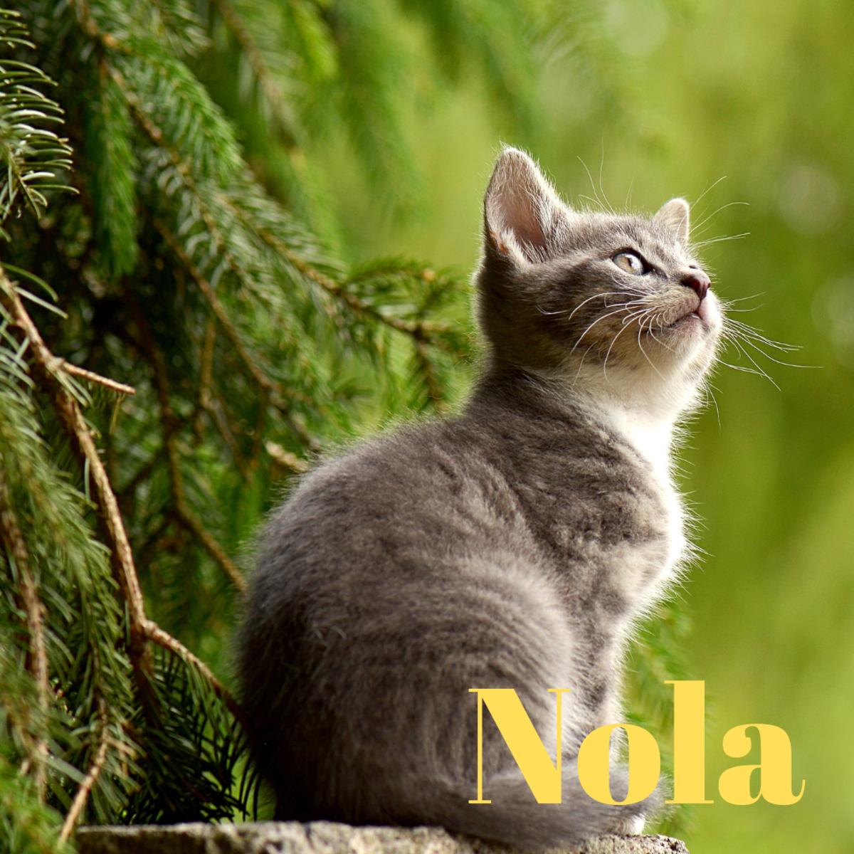 A kitten named Nola