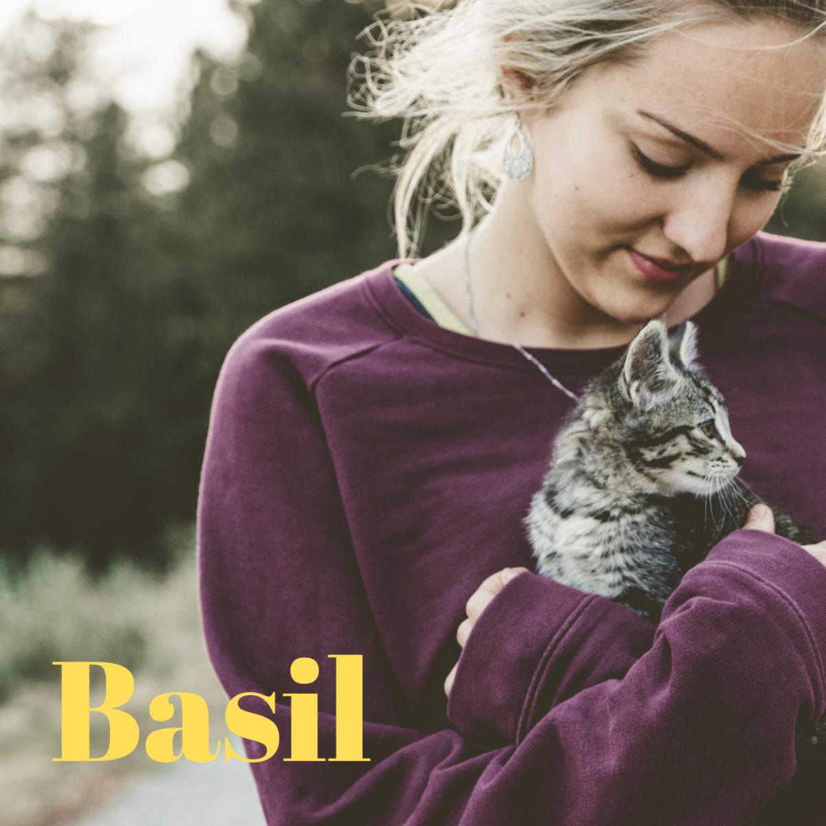 A kitten named Basil