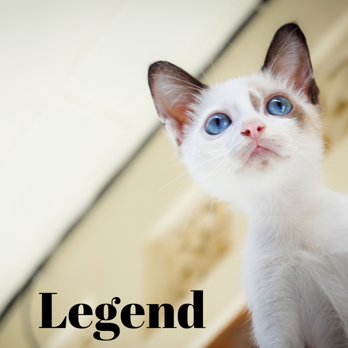 A kitten named Legend