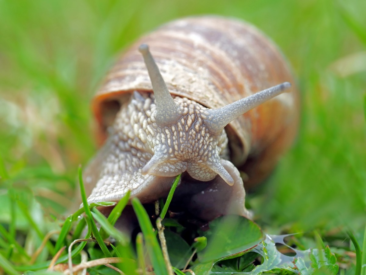 How to Deal With Snails and Slugs in the Garden Naturally and Safely