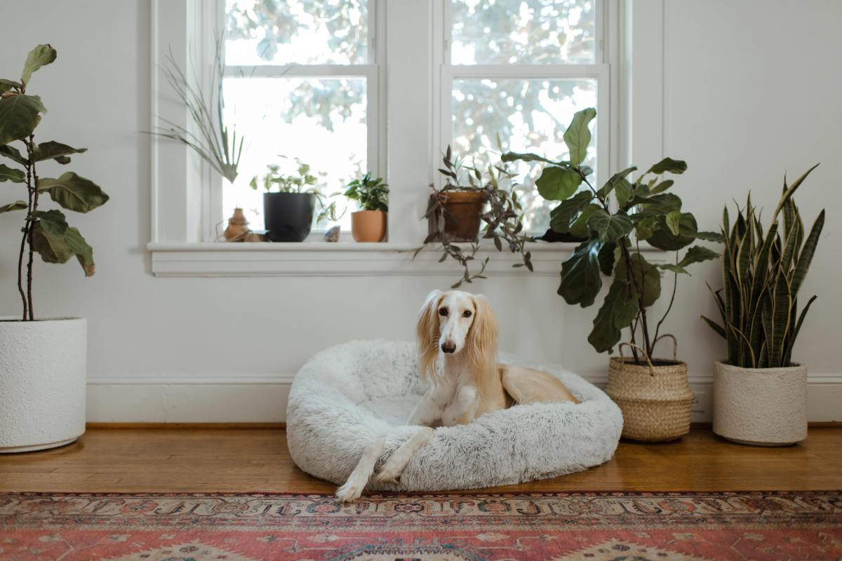 Dogs find comfort in their owner's scent.