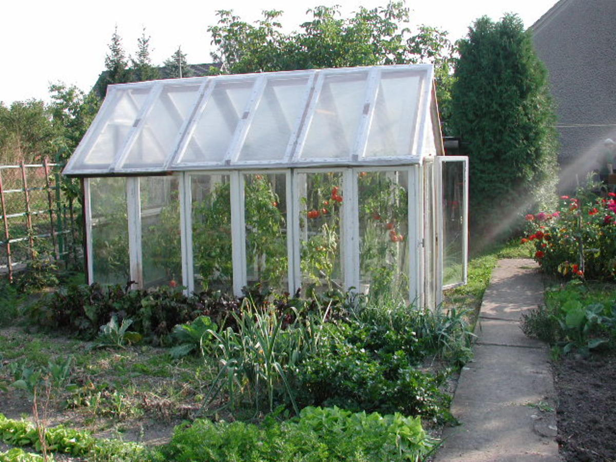 Four Tips for the Greenhouse Gardener Beginner