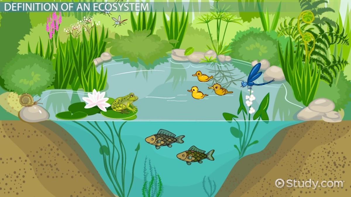 ecosystem understanding