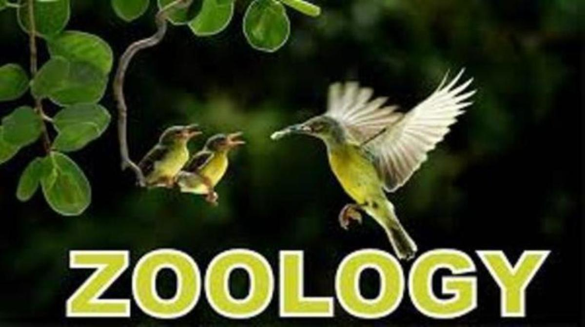 terminologies-of-zoogepgraphy-paleaontology-and-wildlife-management