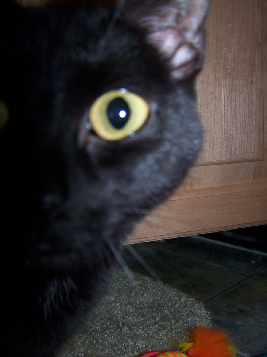 Minerva the black cat may be sneaky, but she's not unlucky!