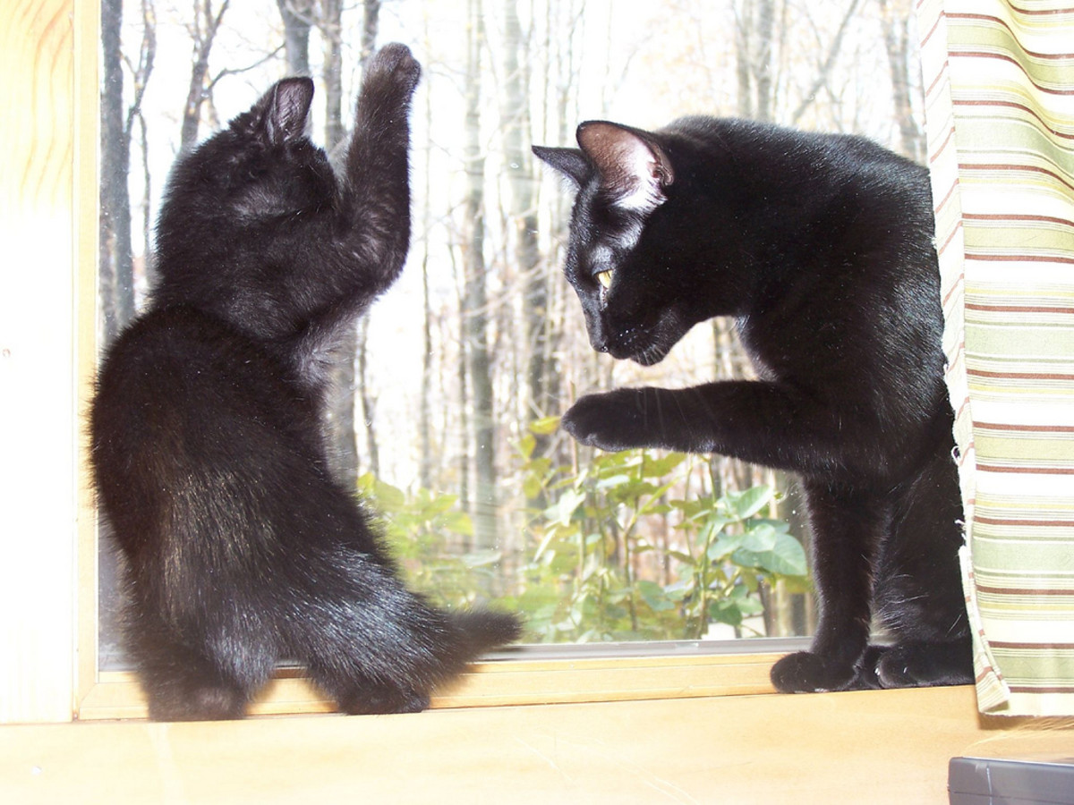 """""""Paws up! Now give me all your crunchies!"""" These two black cats are probably a handful to care for, but I bet they provide lots of laughs, too."""