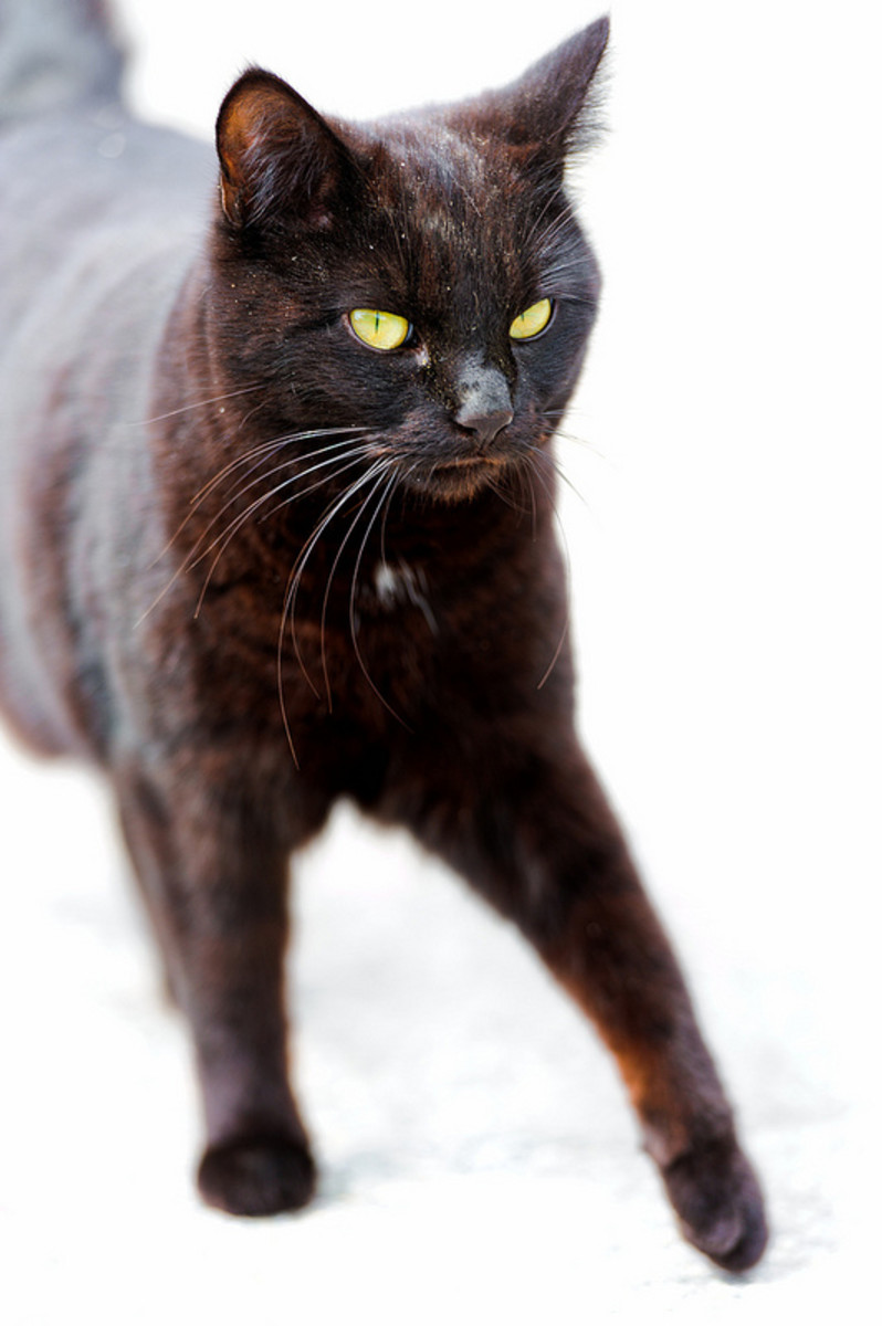 How could something so beautiful as a black cat ever be considered unlucky?