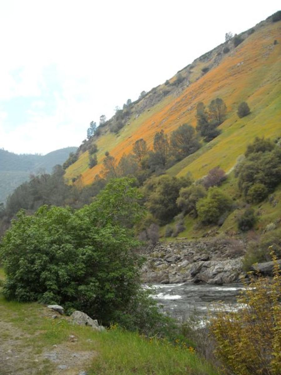 Golden hillsides along the banks of the Merced.
