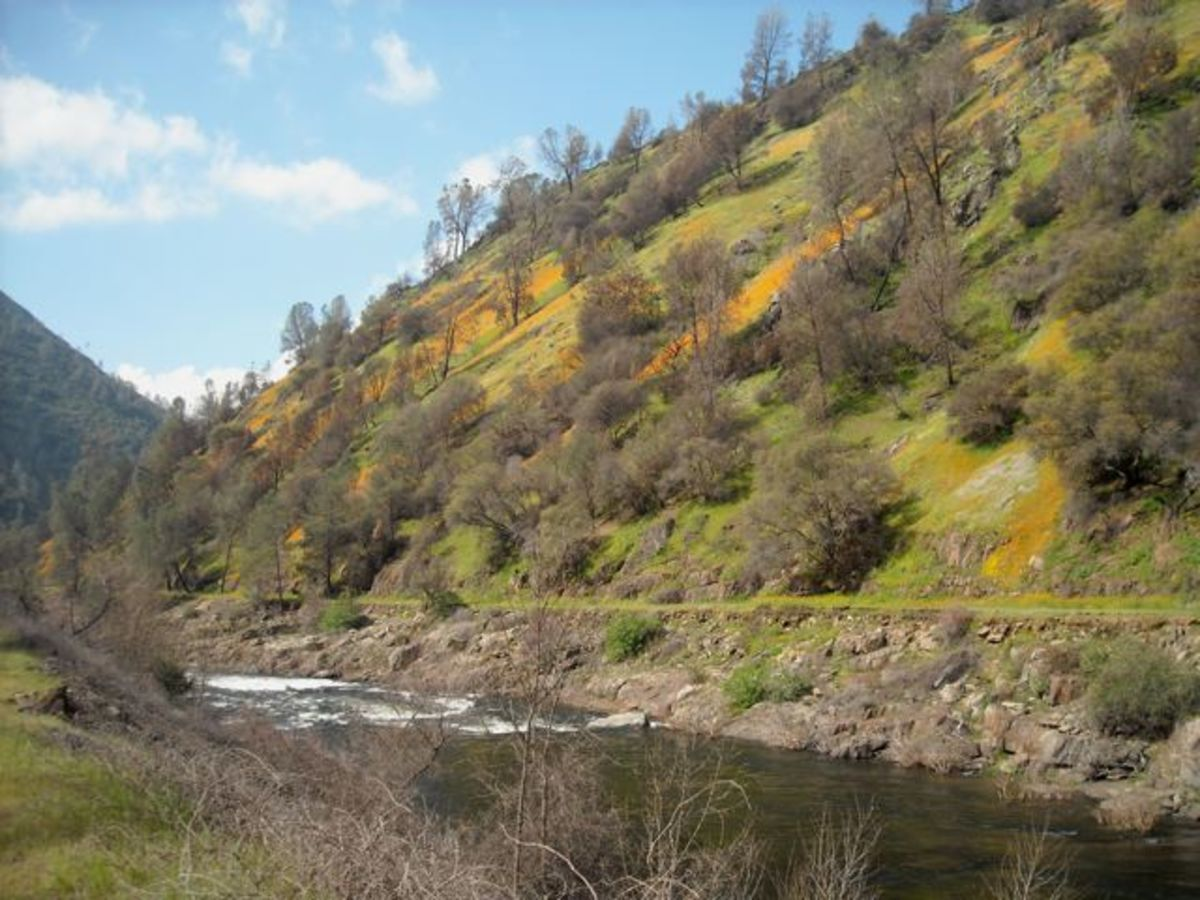 A view of the Merced River, with patches of poppies flowering on the hillside.