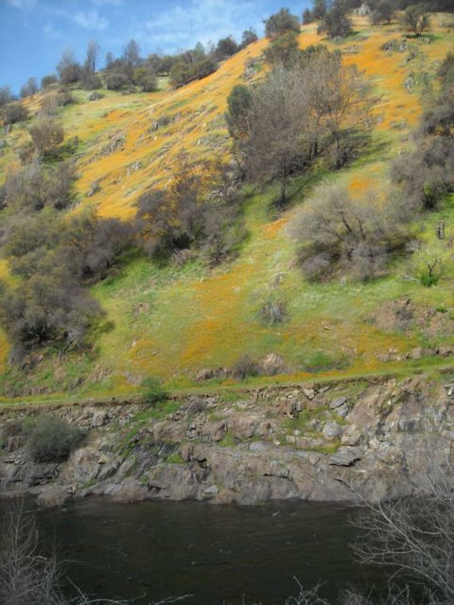 The old railbed along the banks of the Merced.