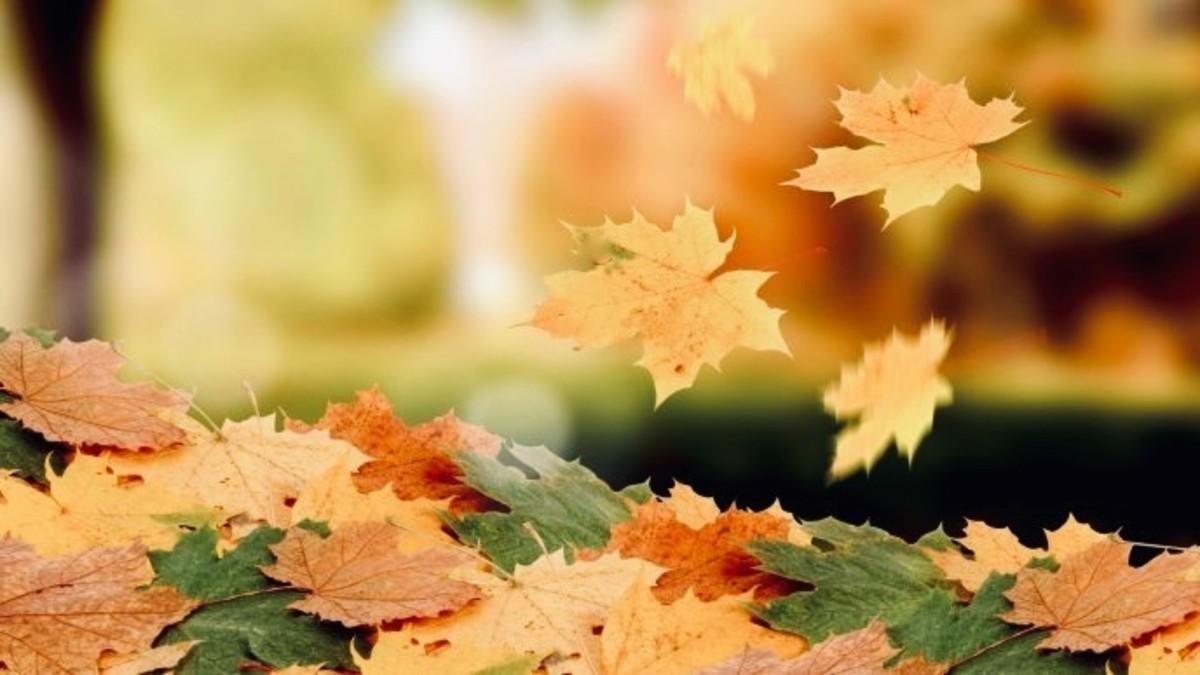 Leaves Are Unique & Beautiful