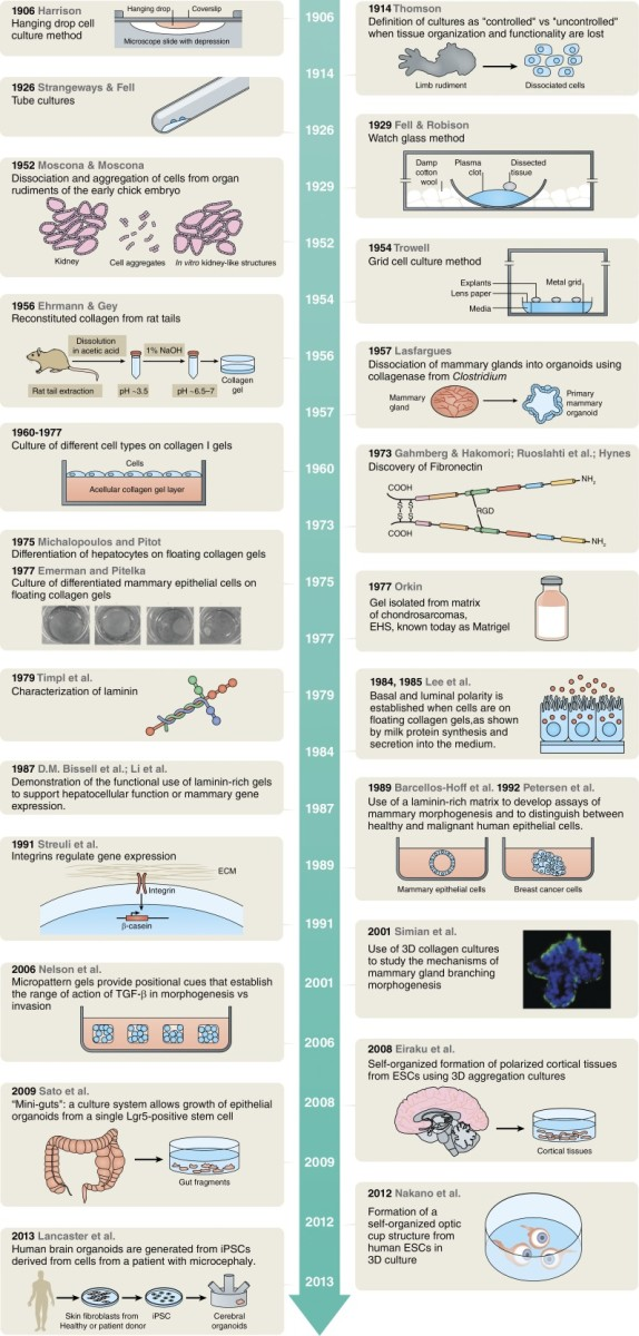 Timeline of techniques and experiments leading to the current organoid field.