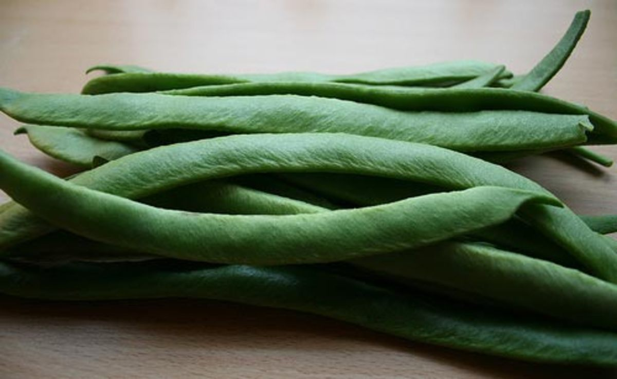 How to Grow Your Own Runner Beans