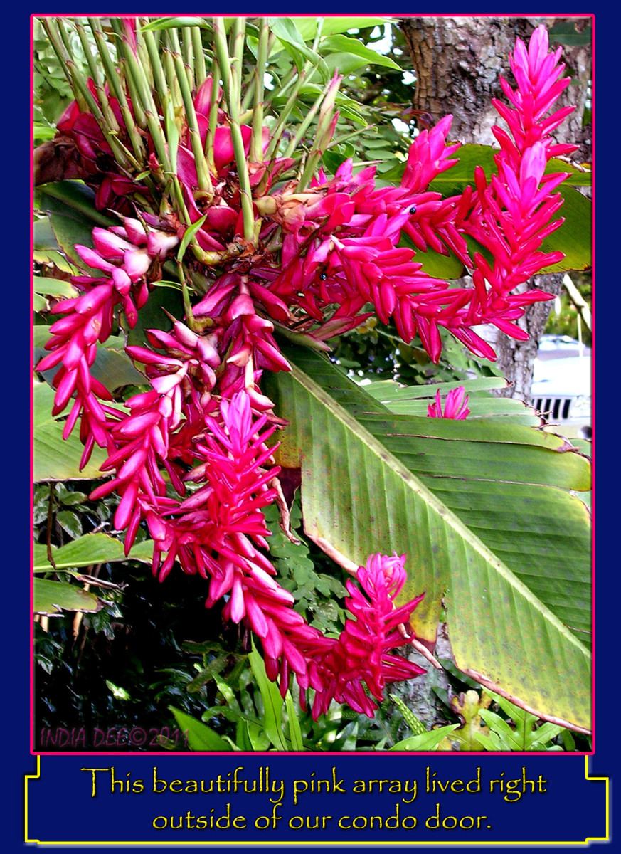 We were amazed at the brightness and sturdy nature of the many plants we found in Napili Bay.