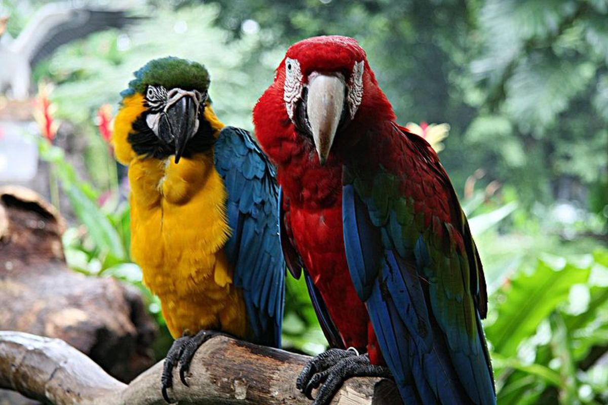 Photographing Macaws