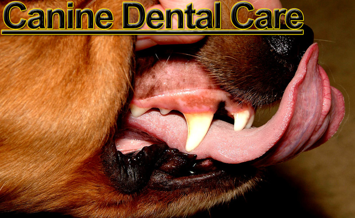 Clean teeth are an indicator that your dog is in good health!