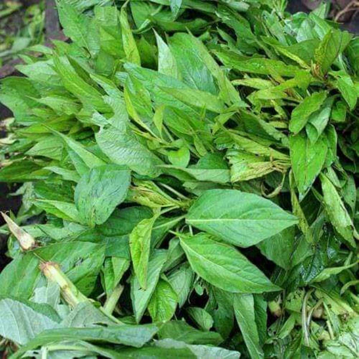 Spinach leaves (also called 'soko')