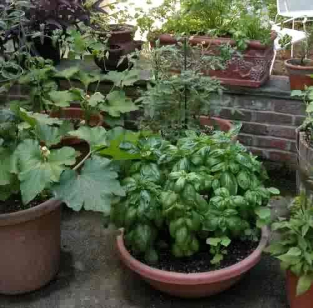 Plant veggies and herbs in containers and pots