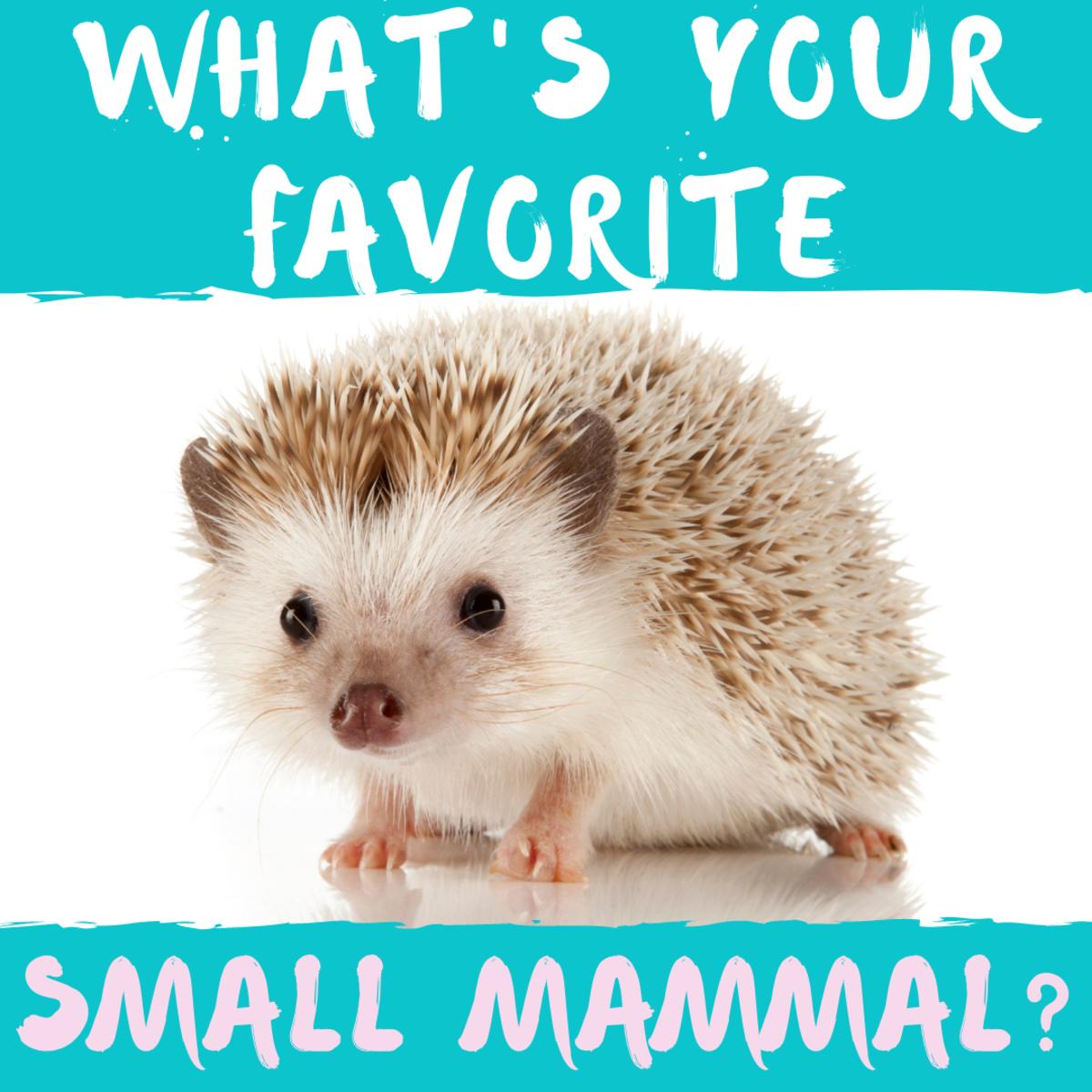 Do you like hedgehogs or guinea pigs?
