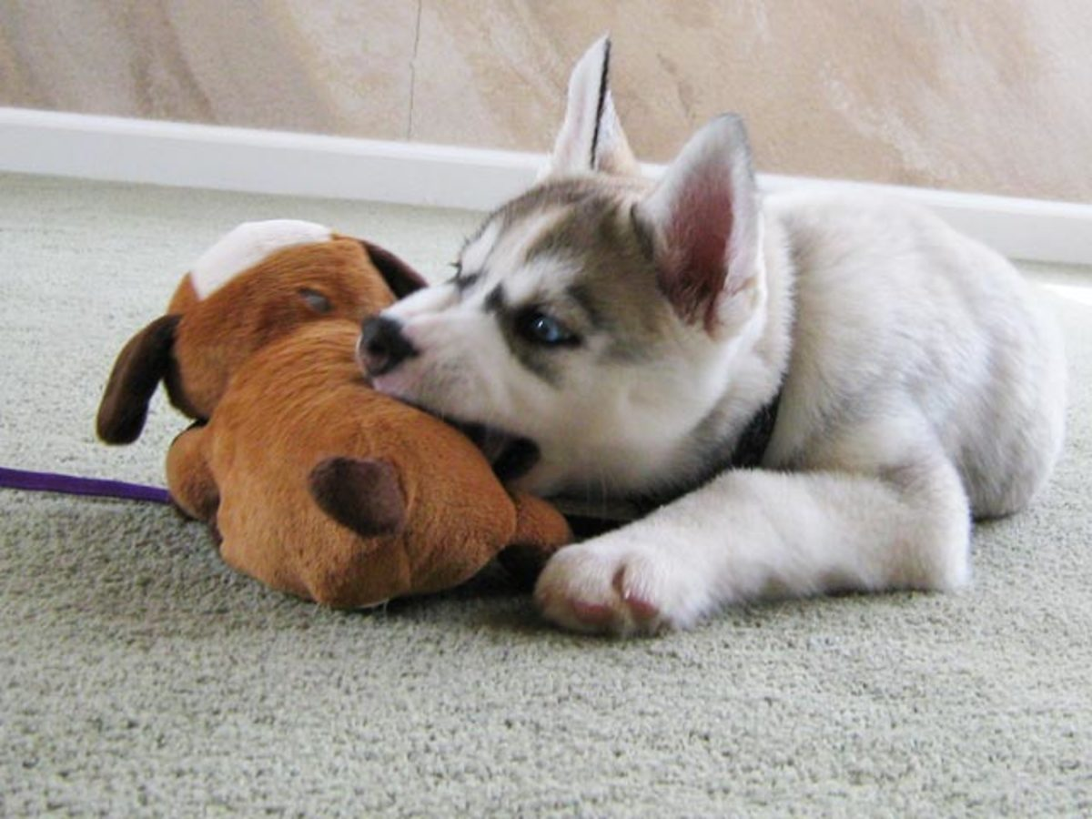 1. Finding the Right Puppy