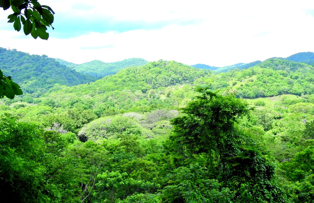 Our view from our Canopy Zip Line tour. We could hear the Howler monkeys in the distance!