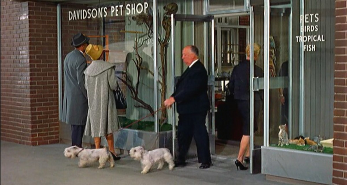 Hitchcock's cameo in The Birds (1963)