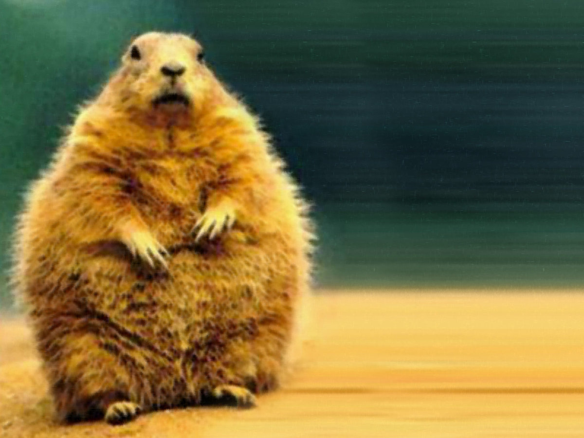 history-of-groundhog-day-what-you-may-not-know