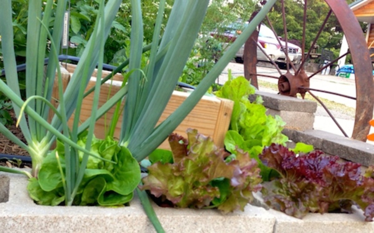 A raised bed made of concrete blocks adds extra garden space for lettuce and onions.