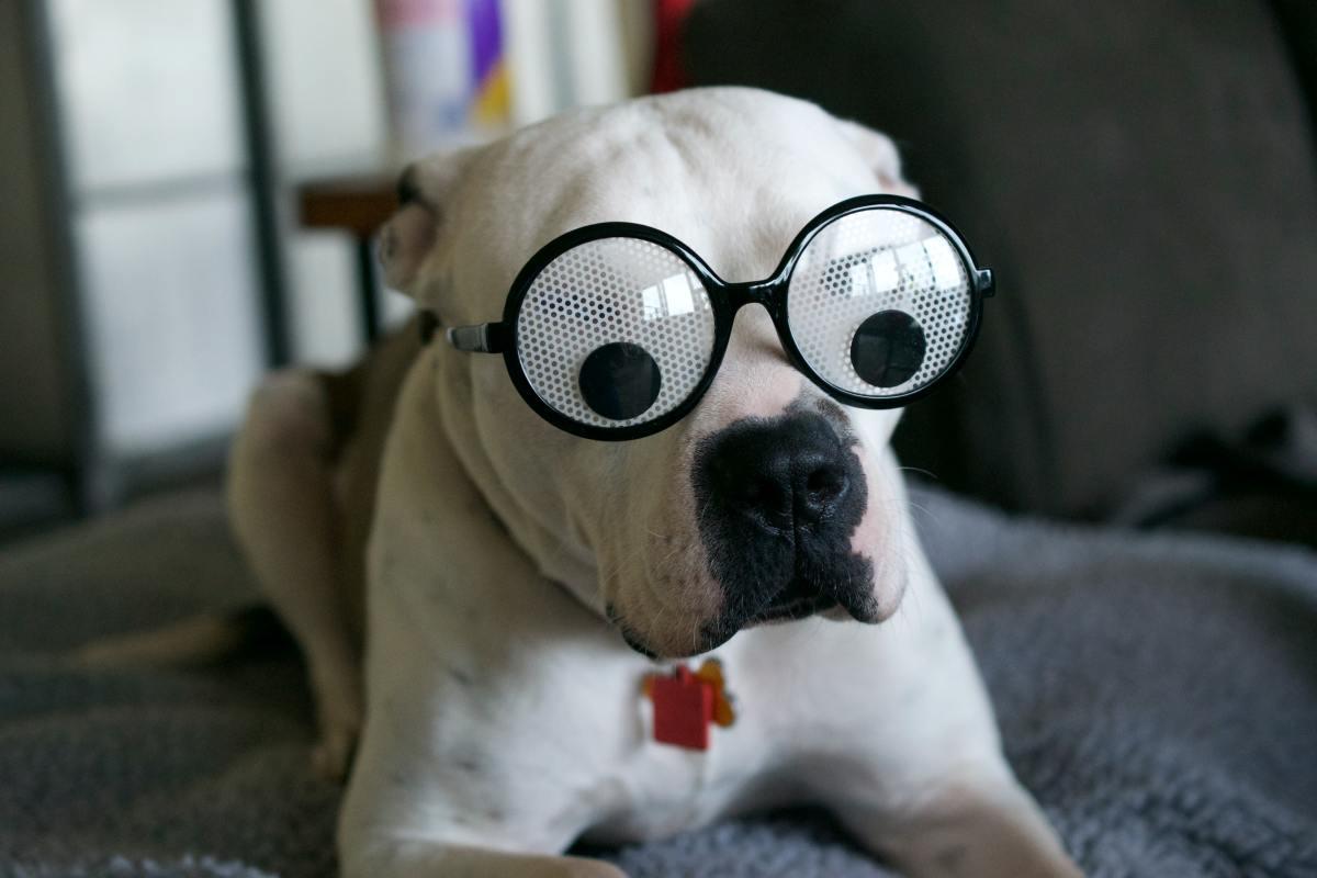 White Boxer dog provides comedy relief.