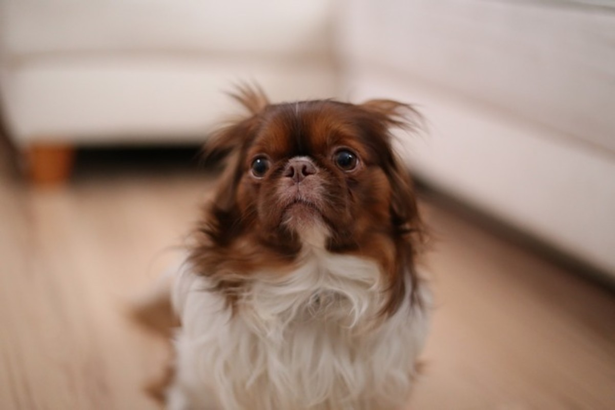 When the dog's ears are flat back, making him resemble a seal or as if he no longer has ears, he may be uncomfortable to very afraid/unhappy about something.