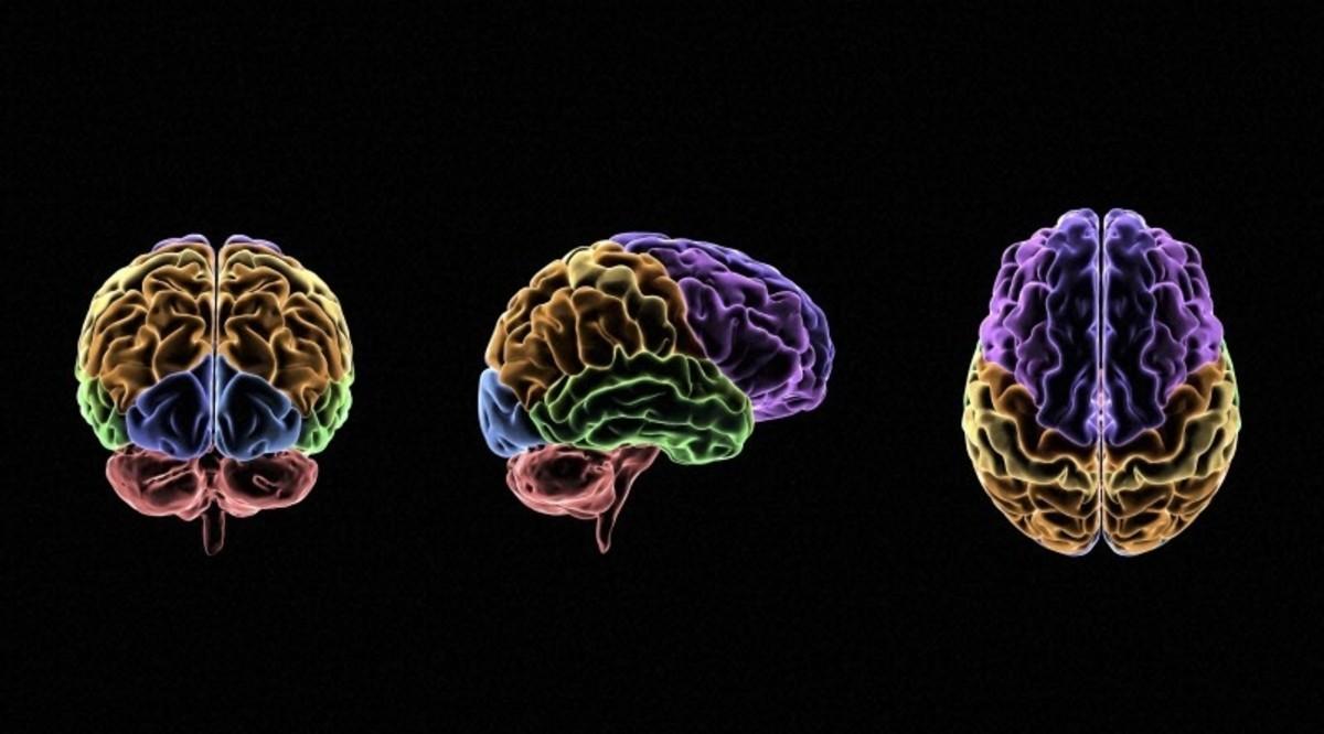 the-brain-behind-all-1