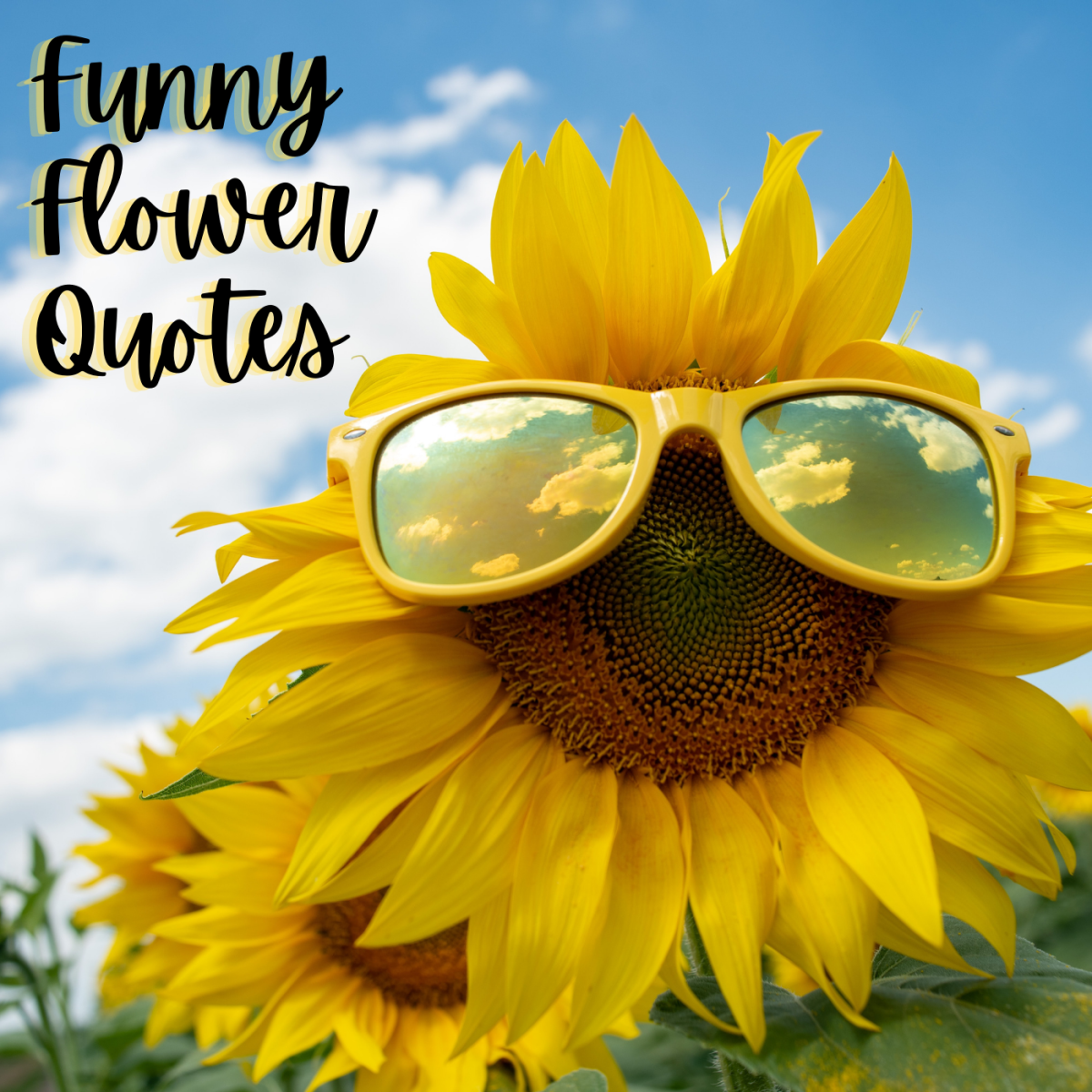 Funny Flower Quotes and Sayings to Include With a Bouquet