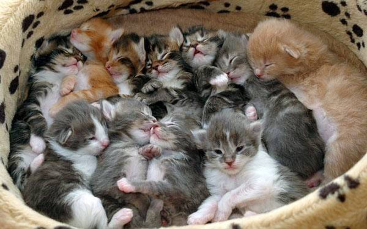 Cats Meowing - 5 Reasons Cat's Meow Too Much.