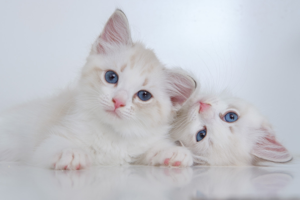 Mork and Mindy cats could be a purr-fect match.