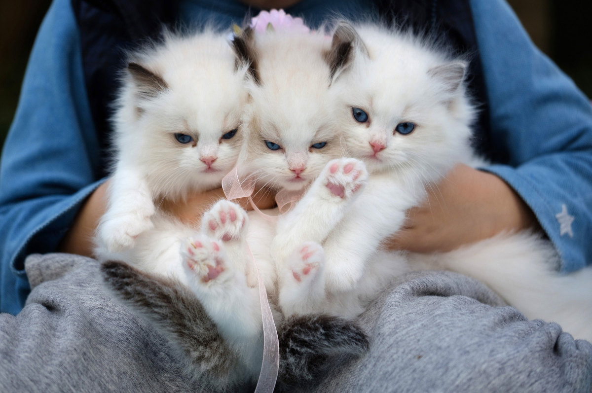 Is that Jack between two kitty cats?