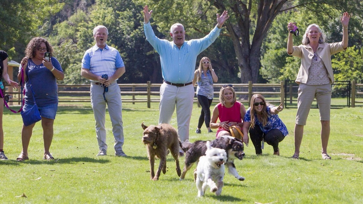 dog-parks-in-denmark-and-why-your-dog-would-love-it