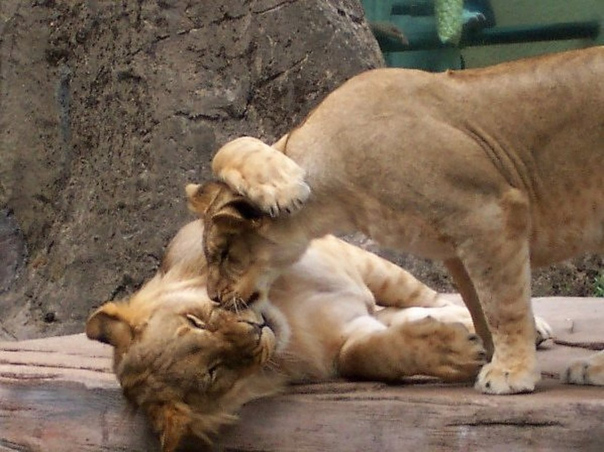 Animals can kiss too -- showing affection