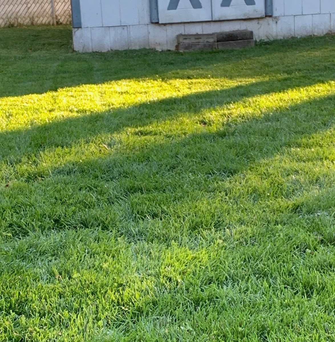 Lawn growing thicker and greener on a frosty morning after thatching and reseeding.
