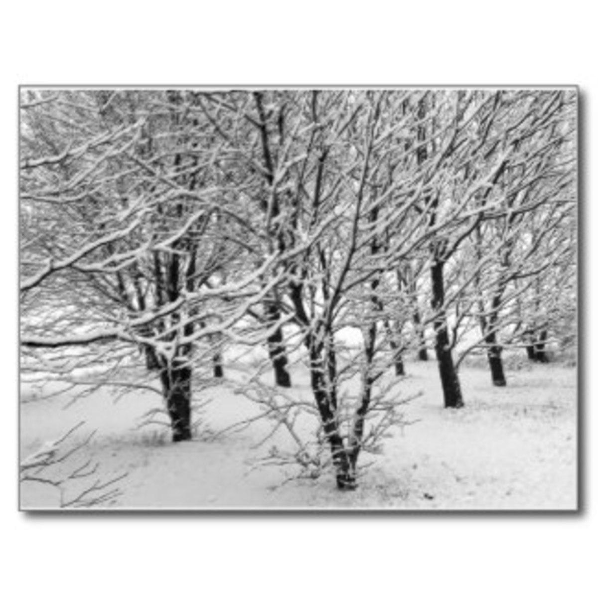 winter snows by ilonagarden