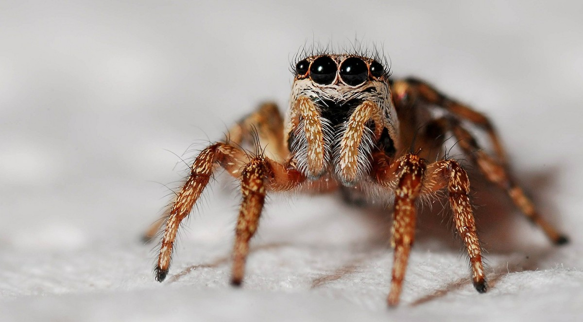 why-you-shouldnt-kill-spiders