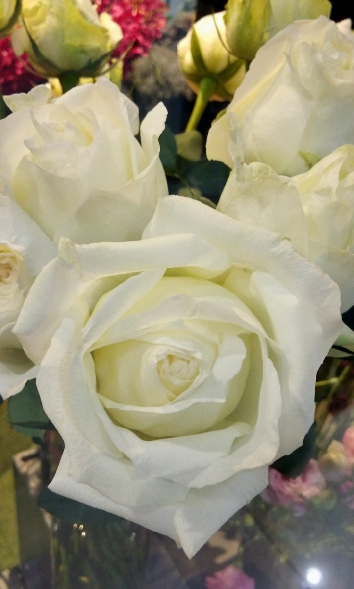 Pure white roses can symbolize pure love